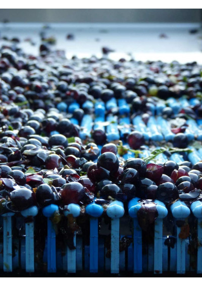 L'apéritif vigneron : atelier dégustation sur la fabrication du vin